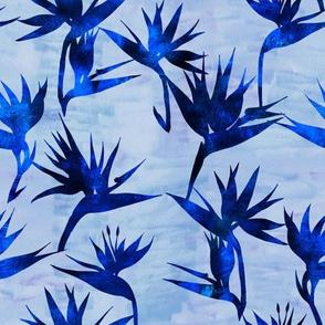 BirdOfParadise2A_blues