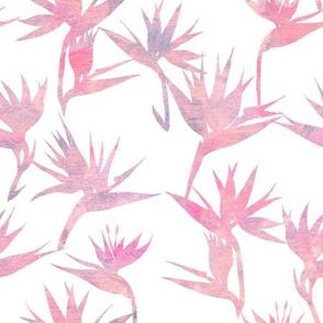 BirdOfParadise2A_pink