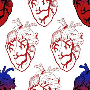 Anatomical Red Hearts