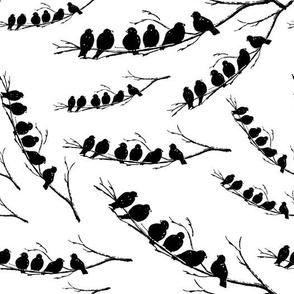 Vintage Birds Black & White