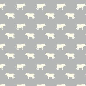 cows gray