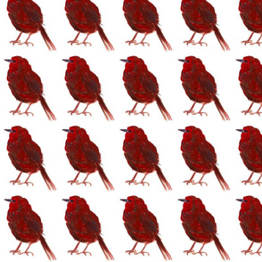 CLEANED red bird