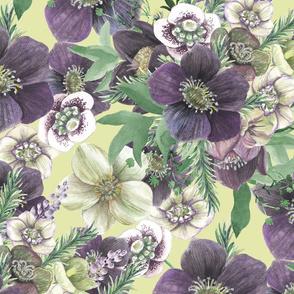 Garden flowers - hellebores