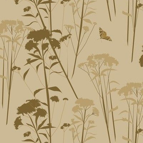 eupatorium flowers - beige-brown