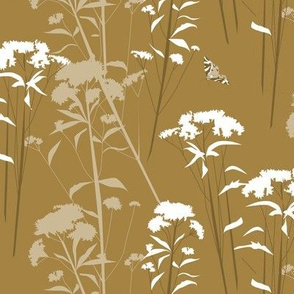 eupatorium - brown-white