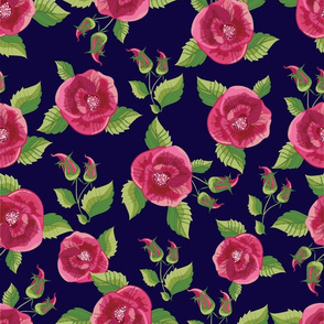 Red Pink Poppies on Navy Background Stunning Design
