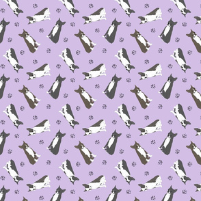 Tiny Boston terriers - purple
