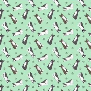 Tiny Boston terriers - green