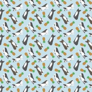 Tiny Boston terriers - pineapples