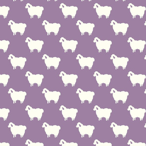 sheep purple
