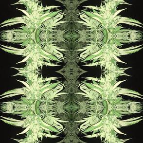 Cannabis Green