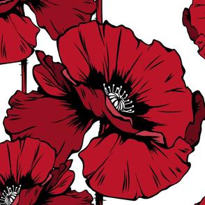 Macro Red Poppies Flowers