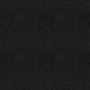 Grey Parrot's Black Bakground