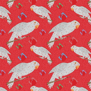 Grey Parrot On Red