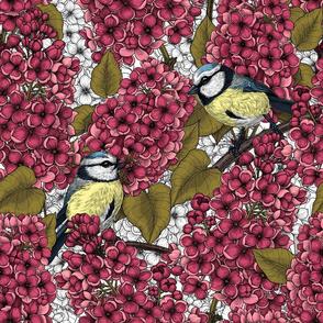 Tit birds in the lilac garden