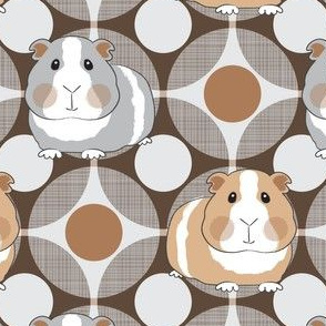 guinea pigs on geometric circles