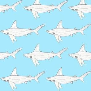 Sandbar Shark edges on light blue