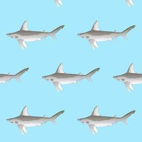 Sandbar Shark on light blue