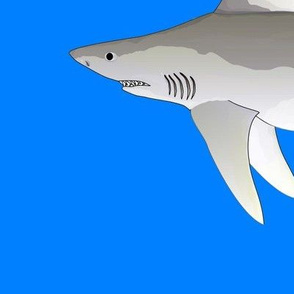 Sandbar Shark on sea blue lg