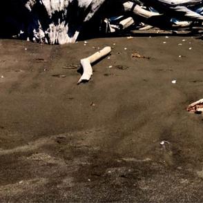 Upturned Tree Roots