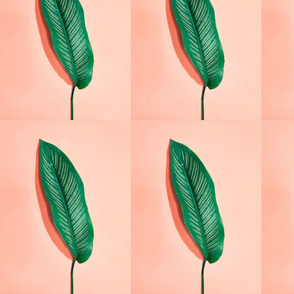 Green Leaf on Orange Background