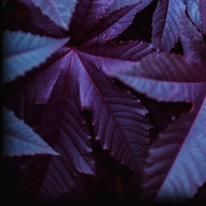 Purple and Blue Leafy Plant Bricks