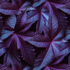 Purple and-Blue Leafy Plant