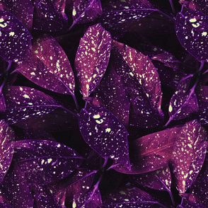 Purple Leafed Plant