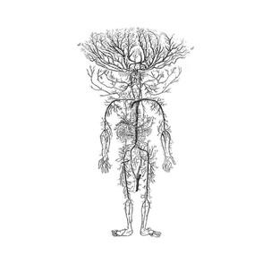 ANATOMIE Homme arbre