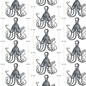 octopus dot