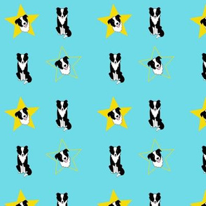 Border Collies and Yellow Stars on Turquoise