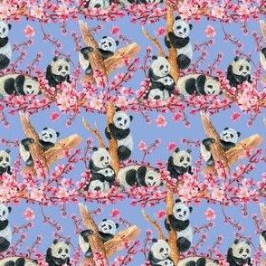 panda final