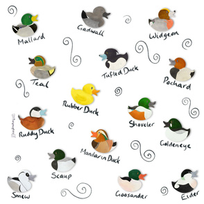 Duck ID Guide