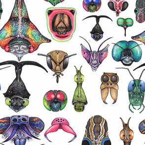 Insectica