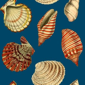 Shells on deep blue