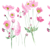 Pink Cosmos  in watercolour