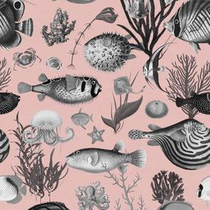 Oceania Grey Blush Pink