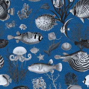 Oceania Grey Classic Blue