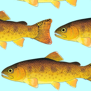 Gila Trout on light blue