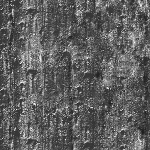 Tree texture in black and white