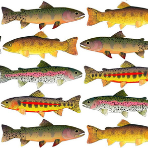 4 Rocky Mountain Trout