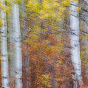 Autumn Trees in Motion ChipabirdeeImages_MarilynGrubb_-6045