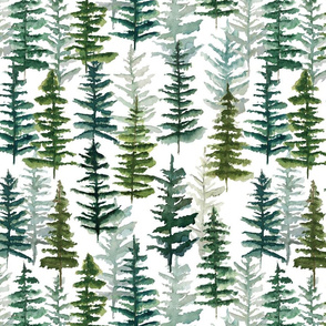 firs and pines