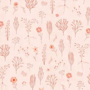 Meadow pink