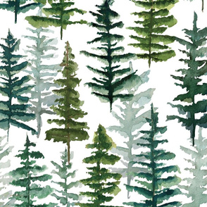 firs and pines // large