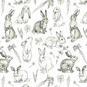 Rabbit Sketches