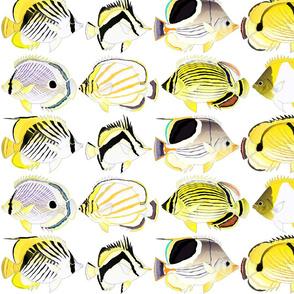 8 Butterflyfish