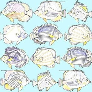 8 butterflyfish as lines on light blue