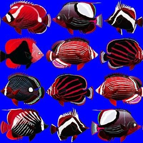 8 butterflyfish reds, whites, and sea blue