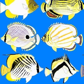 8 butterflyfish on sea blue